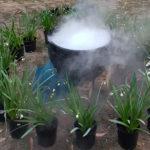 Steaming Cauldron