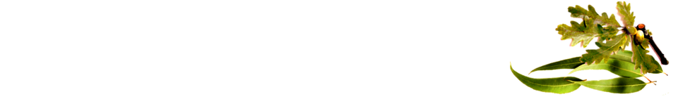 Druidry Australia